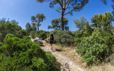 Camping Ollioules proche mer dans le Var (83)
